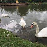 Foto van Maymyo Botanical Garden (National Kandawgyi Park)