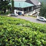 Ceylon Tea Trails- Tea Plantation & a tea factory