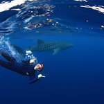 Thumbs up with whaleshark.