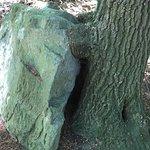 Tree holding rock