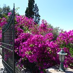 Einfahrt zur Villa Anthoussa