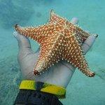 Sea Critters Snuba St Lucia