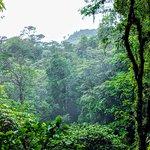 Scene from the Rainforest