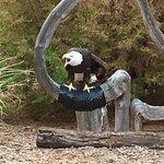 Eagle Valley Raptor Center resmi