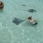 swimming with rays, and feeding them and holding them. They feel like a soft towel