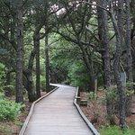 The boardwalk (short) trail