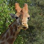 Photo de Thoiry ZooSafari