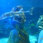 Mermaids and fish.
