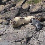 Photo of Plockton Seal Trips
