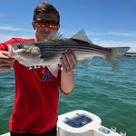 Maine Striped Bass