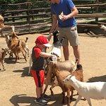 Foto de Grant's Farm