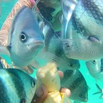Fish feeding at the Island during snorkeling