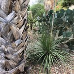 cactus garden in Alamo