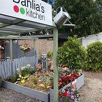 Dahlias in  full summer colour
