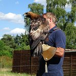 Forest Falconry Foto