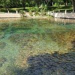 Foto de Salt Springs Recreation Area