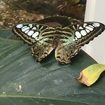 Foto Key West Butterfly and Nature Conservatory