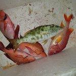 Улов за полтора часа, хищная рыба, с лодки на рифе