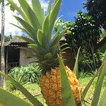 Снимок Mae Yao Resort