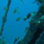 Foto di Diving Center Nautico