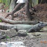 blackpool zoo cayman