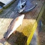 Foto de Ollie Raja Fishing Charters