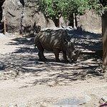 Philadelphia Zoo Foto