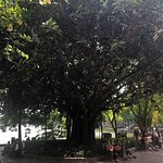 Фотография Lake of the Restored Sword (Hoan Kiem Lake)