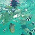 Photo of Alupang Beach Club