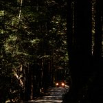 Fern Canyon resmi
