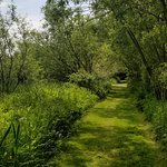 Path on the lakeside stroll at Renishaw Hall