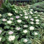Фотография Winter Garden Auckland Domain