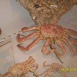 a crab specimen