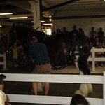 Draft horse demonstration