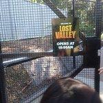 Currumbin Wildlife Sanctuary Foto