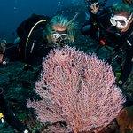 Pygmy seahorse spotting