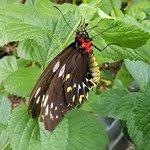 صورة فوتوغرافية لـ Butterfly World