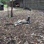 Perth Zoo ภาพถ่าย