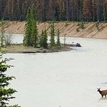 Very peaceful location a couple of miles outside Jasper. Walk down to the Athabasca River in the