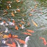 Taj Madikeri Resort & Spa, Coorg