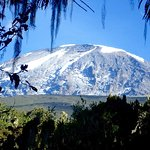 Good view of mount kilimanjaro