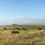 6 am game drive. Kilimanjaro beauty