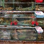 Fresh fish and sea food
