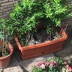 Cat hiding in a planter