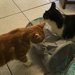 Cats investigating the toy we brought them