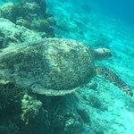 蓝海浮潜中心照片