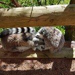 Northumberland Country Zoo照片