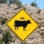 Caution Cow mutilation