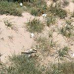 Billede af Spiaggia di Platamona