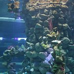 Coral reef cylinder tank